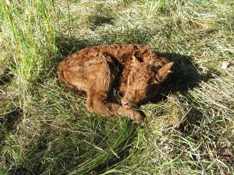 Newborn(1)