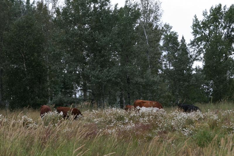 New Pasture to graze.