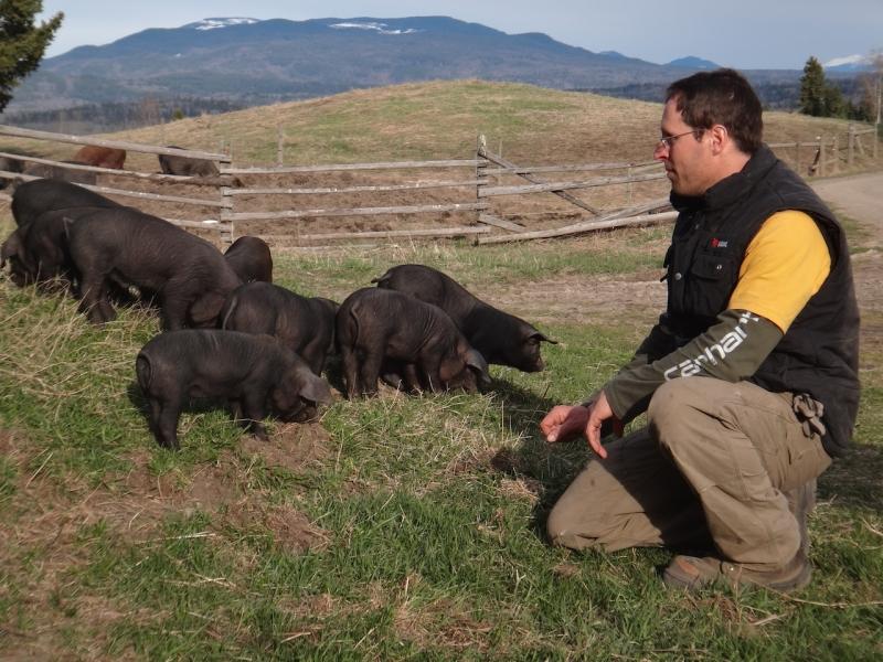 Schweinchen Dig